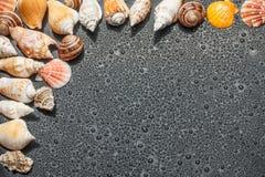 在水的黑色背景的贝壳 免版税图库摄影