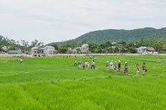 在水稻游人走间 免版税库存图片