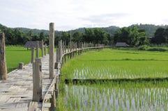 在水稻绿色域的老竹桥梁 免版税库存照片