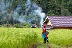 在水稻领域五颜六色的服装礼服的愉快的微笑小山部落 库存照片