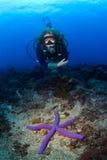 在水肺seastar游泳妇女的潜水员 免版税图库摄影