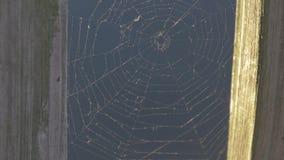 在水背景关闭上的蜘蛛网 股票录像
