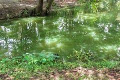 在水表面的绿藻类 环境污染概念 图库摄影