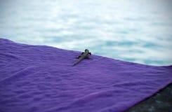 在水边看的好奇蜥蜴 免版税库存照片