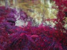 在水边缘的紫罗兰色蕨 库存图片
