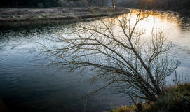 在水附近的偏僻的光秃的树 库存图片