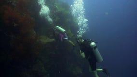 在水面下轻潜水员 股票录像