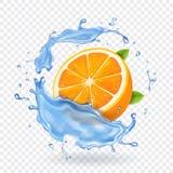 在水飞溅的橙色果子 现实果子 皇族释放例证
