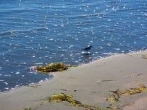 在水` s边缘的孤立鸟 库存图片