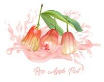 在汁液飞溅桃红色颜色的蒲桃果子 免版税库存照片