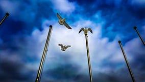 在汝矣岛在汉江旁边的汉城韩国的海鸥 免版税图库摄影
