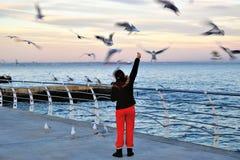 在江边的哺养的海鸥 免版税库存照片