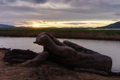 在江边的木材 图库摄影