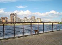 在江边的法国牛头犬 免版税库存照片