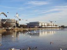 在江边的海鸥 免版税库存图片