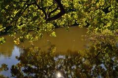 在池塘上分支 免版税库存照片