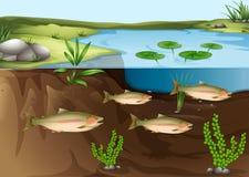 在池塘下的生态系 免版税库存图片