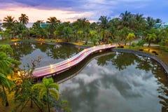 在池塘反映的棕榈树在日落 免版税库存图片