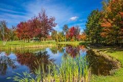 在池塘反映的秋天叶子 库存图片