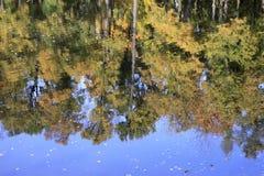 在池塘反映的秋天树 免版税库存图片