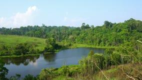 在池塘和小山附近包缠在雨林的慢吹的绿色树 森林晴天和蓝天和白色云彩 新鲜空气和g 股票视频
