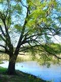 在池塘旁边的大橡树在农村密西西比 库存照片