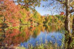在池塘旁边的秋叶 库存照片