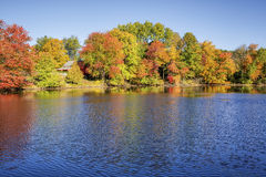 在池塘旁边的秋叶 库存图片
