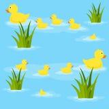 在池塘无缝的样式的鸭子 免版税库存图片