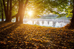 在池塘日落 免版税库存图片