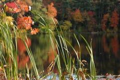 在池塘沉寂附近的叶子 库存照片