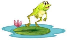在池塘的一只青蛙 免版税库存图片