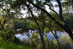 在池塘的一天 免版税库存图片