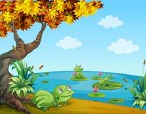 在池塘的三只池蛙 库存例证