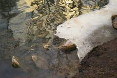在池塘的冰 免版税库存照片