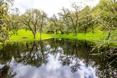 在池塘的反射在树木繁茂的乡下 免版税库存图片