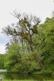 在池塘的岸的树在Nymphenburg宫殿附近的公园在慕尼黑在巴伐利亚 免版税图库摄影