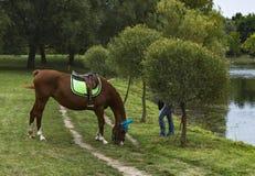 在池塘的岸的马啃的草 免版税库存图片