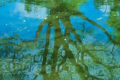在池塘的惊人的反射浇灌,树、植物和周围的泰国庭院公园秀丽 库存照片