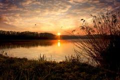 在池塘的日出有鸟的 库存图片