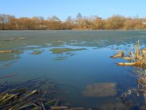 在池塘的春天 库存照片