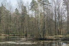 在池塘的春天 免版税库存照片