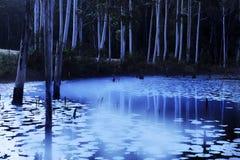 在池塘的晚上薄雾 免版税库存照片