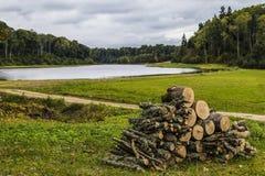在池塘的木头 向量例证