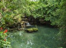 在池塘的树荫下 库存照片
