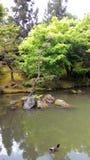 在池塘的树 免版税库存图片