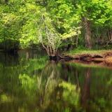 在池塘的树 库存图片