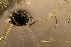 在池塘的水漩涡 免版税库存照片