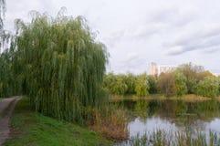 在池塘的看法在莫斯科 库存照片
