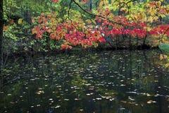 在池塘的秋天叶子 库存图片